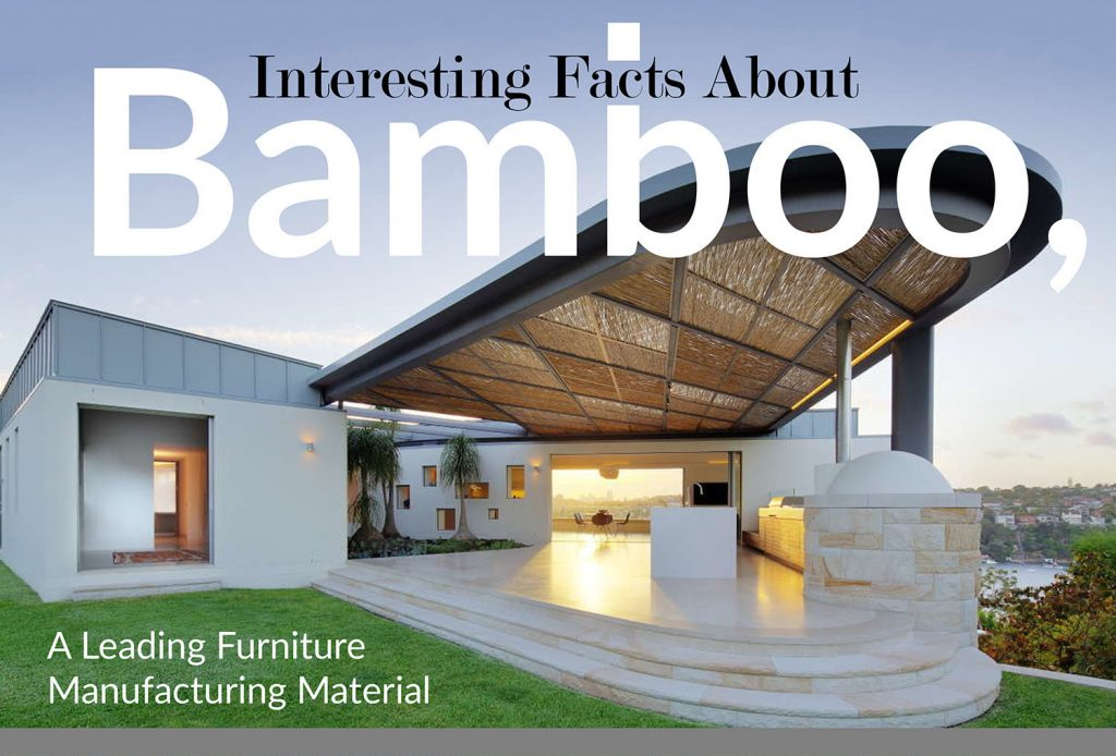 Interesting Facts About Bamboo A Leading Furniture Manufacturing
