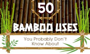 50 Uses of Bamboo You Might Not Know About